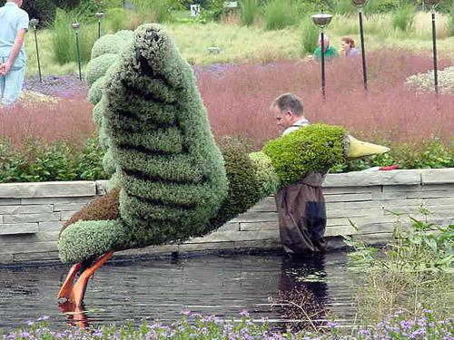 canardenplante.jpg