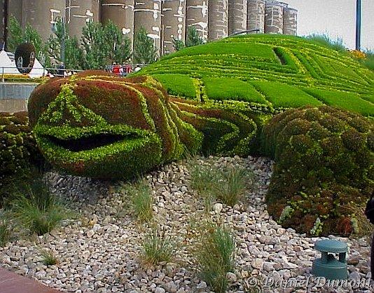 tortueenplante.jpg